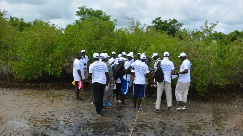 Cours régional mangrove