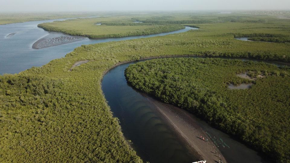 Vue aérienne de la mangrove