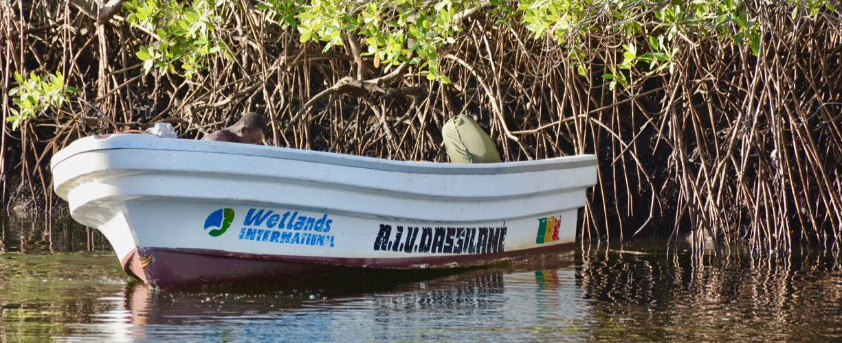 Pirogue Wetlands