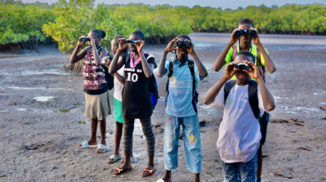 Bird watching dans le Saloum