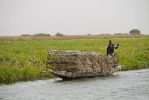 Les plans visant à accroître la production alimentaire et énergétique en amont auront des répercussions majeures sur la production et les moyens de subsistance dans le Deltat Intérieur du Niger