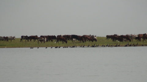Jusqu'à deux millions de personnes dépendent du Delta Intérieur du Niger pour leur subsistance : petits exploitants agricoles, pêcheurs migrants et sédentaires, et éleveurs de chèvres, de moutons et de bovins