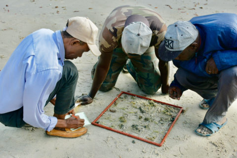 Seagrass training