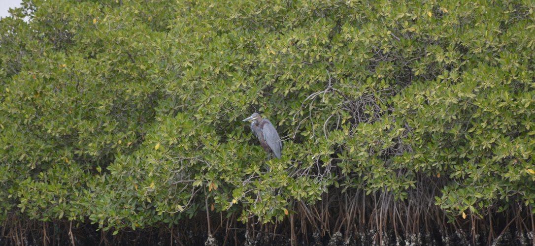 Foret de mangrove saloum